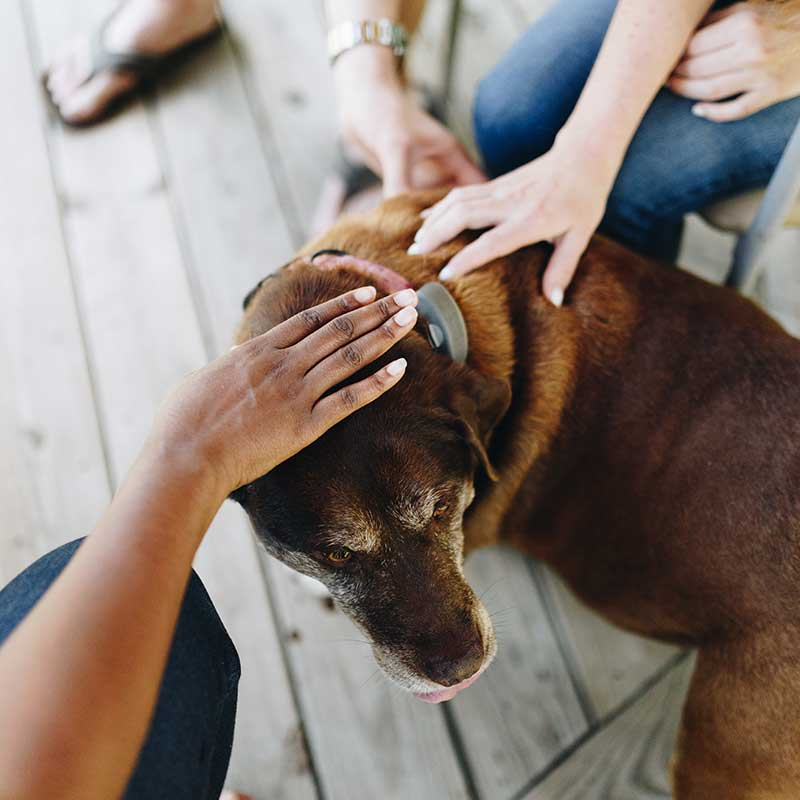 People petting a dog
